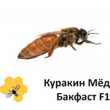 """Матки бакфаст F1 """"Куракин Мёд"""" в наличии"""