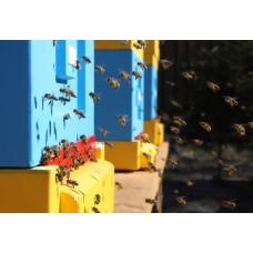 Пчелосемья Карника (10 рамок Дадан) на 2021 г.