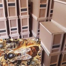Пчелопакет Дадан (4 рамки) Карника, РБ, в наличии
